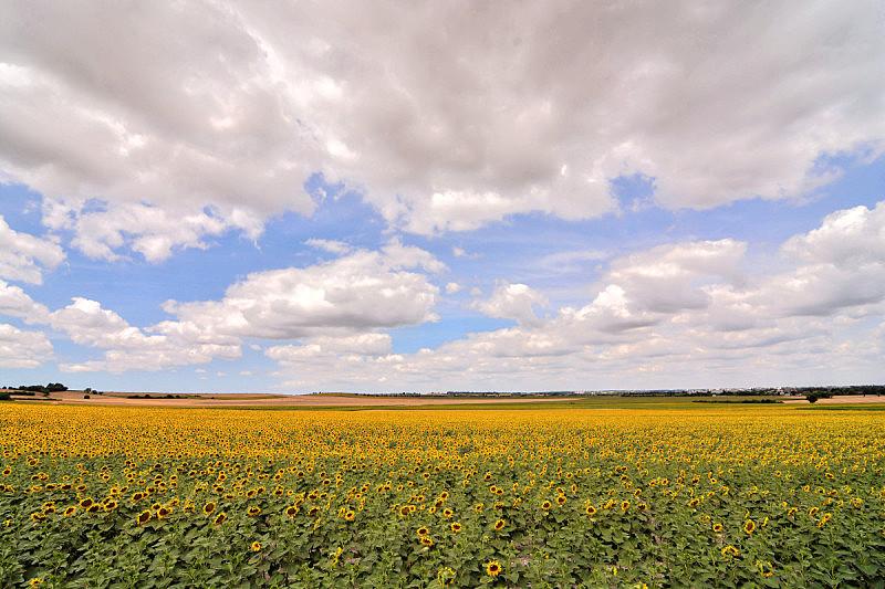 欧洲,自然,法国,草,豪宅,农场,向日葵,河流,夏天,户外