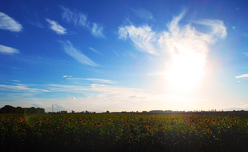田地,向日葵,黑森林,天空,水平画幅,无人,户外,日落,摄影