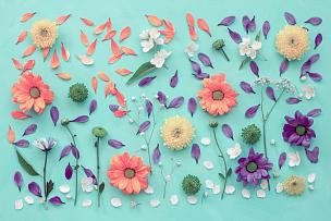 静物,平铺,排列整齐,紫苑,花纹,春天,甘菊,画布,自然,粉色