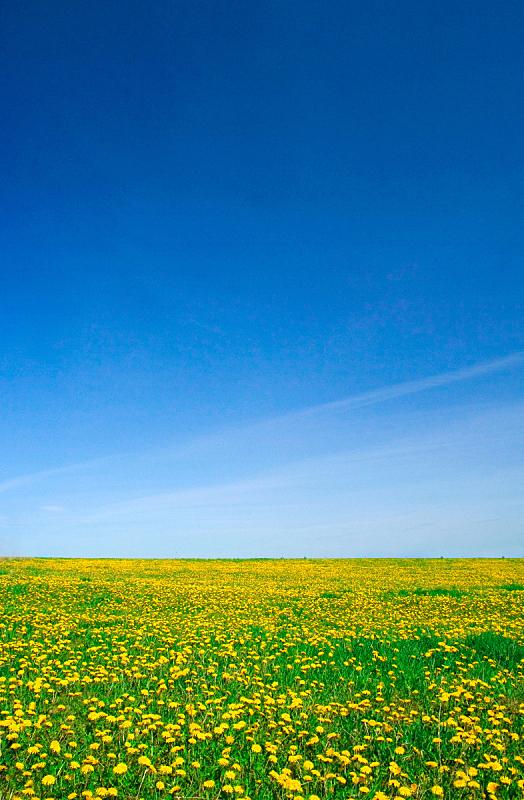 田地,自然,垂直画幅,天空,草地,绿色,地形,无人,蓝色,夏天