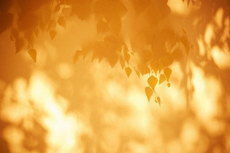 叶子,背景,秋天,阴影对焦,留白,水平画幅,枝繁叶茂,无人,夏天,阴影