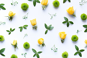 白色背景,菊花,黄色,鲜花盛开,叶子,静物,在上面,绿色,花纹,成组图片