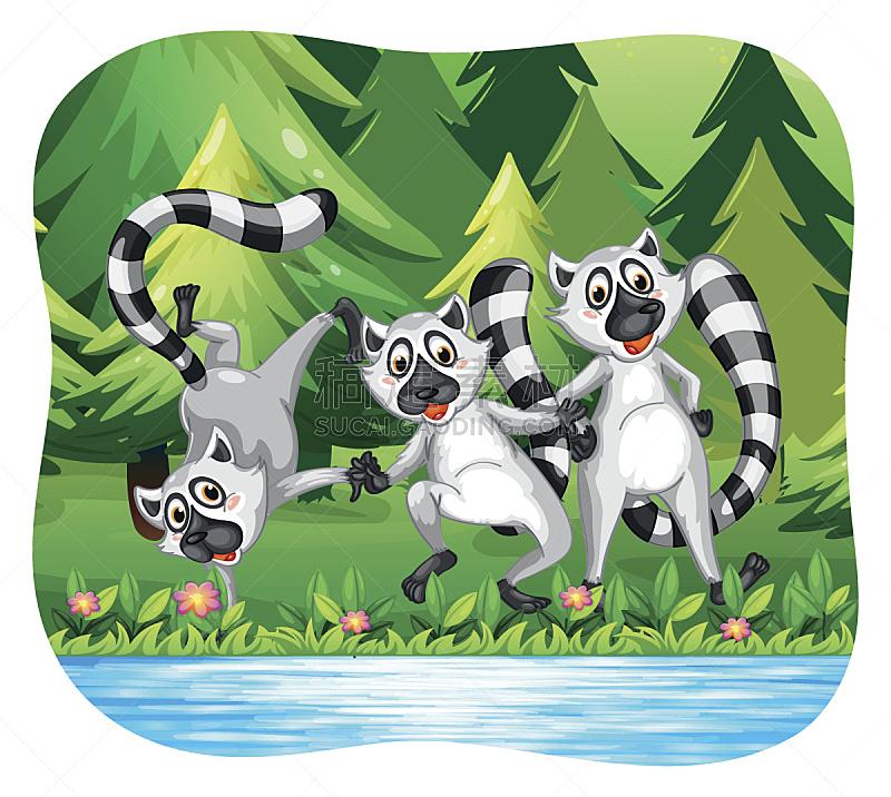 狐猴,河岸,三只动物,幸福,自然,松树,野生动物,无人,绘画插图,剪贴画