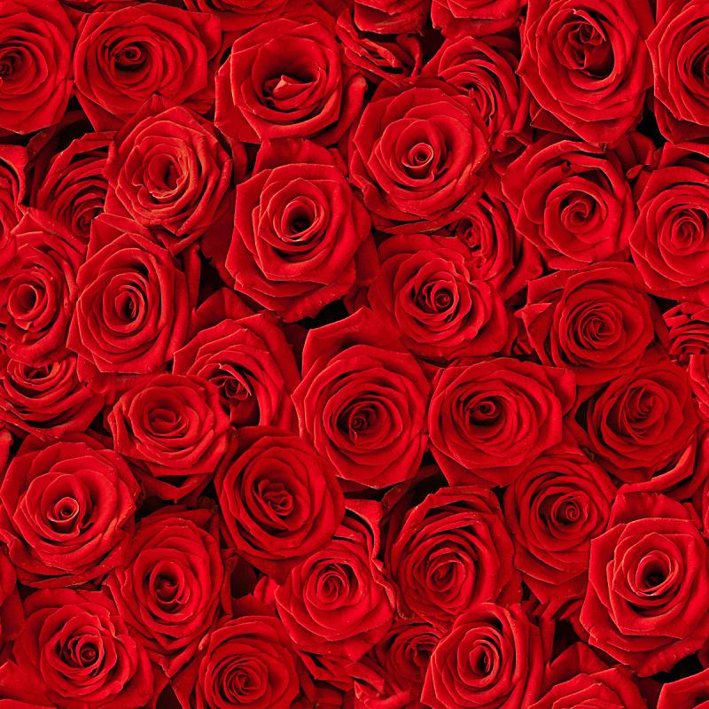 玫瑰,红色,背景,多样,无人,符号,特写,花束,植物,大量物体