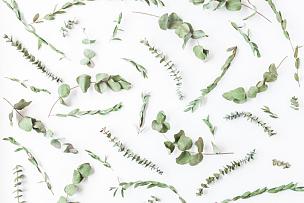 桉树,干的,枝,式样,平铺,反差,爱沙尼亚,叶子,档案,芳香的