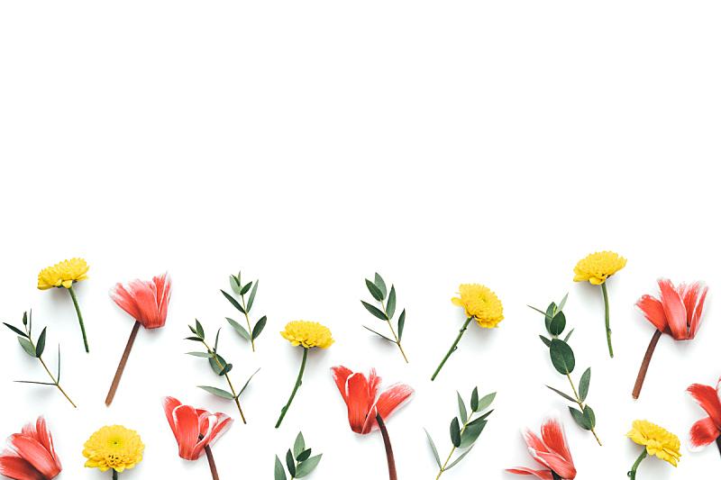 春天,白色背景,樱草属,式样,贺卡,复活节,清新,边框,浪漫,壁纸
