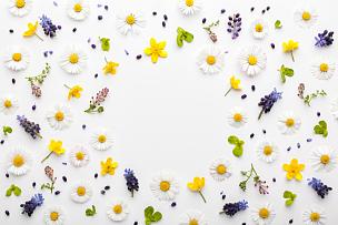 绿色,春天,多色的,边框,白色背景,叶子,贺卡,水平画幅,纺织品,夏天