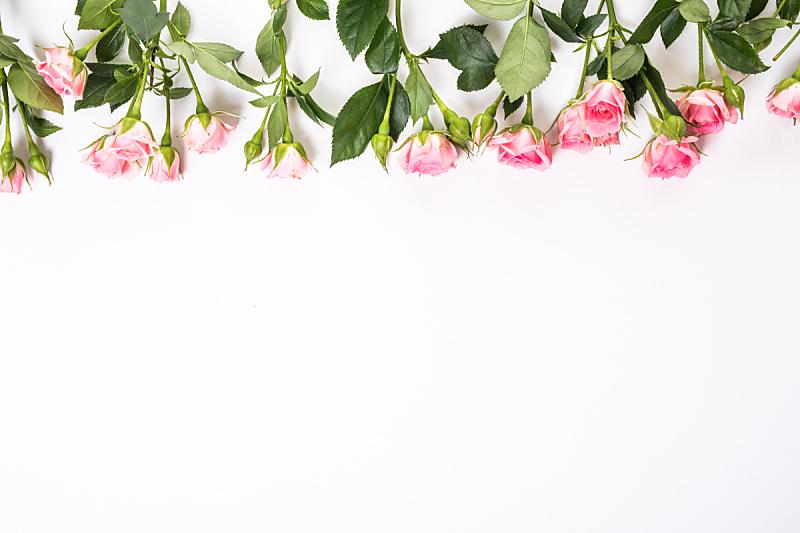 清新,白色背景,粉色,分离着色,正下方视角,国境线,玫瑰,美,贺卡,水平画幅