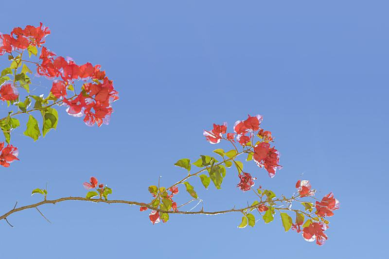 圣诞老公,天空,青绿色,乌拉圭,美,水平画幅,绿色,无人,时尚,植物