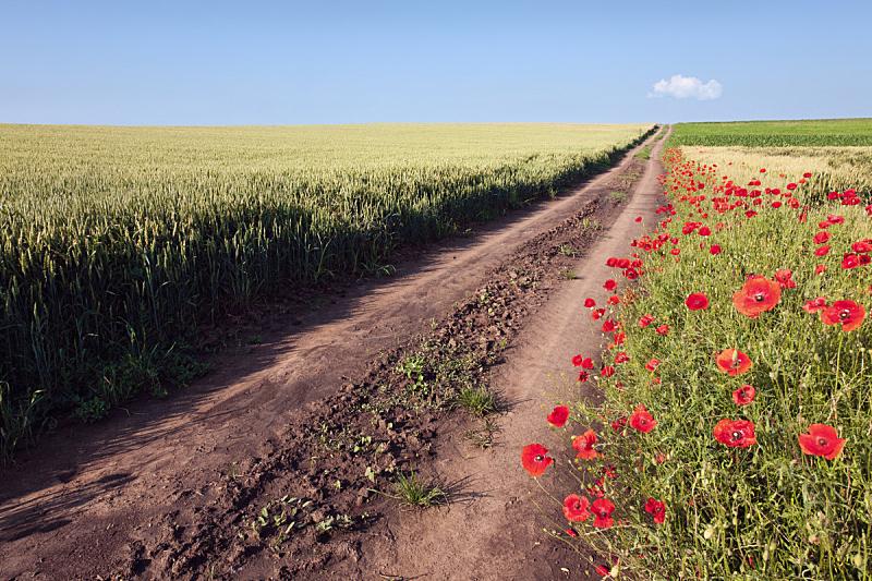 田地,土路,栽培植物,天空,水平画幅,无人,早晨,透视图,夏天,户外