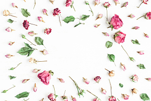 干的,仅一朵花,边框,玫瑰,白色背景,留白,高视角,干花,古典式,夏天