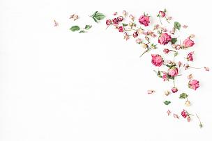 仅一朵花,玫瑰,干的,边框,在上面,平铺,视角,干花,花瓣,花蕾