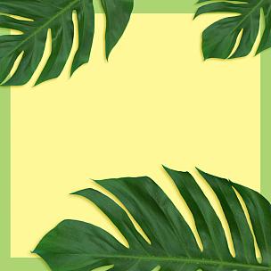 棕榈叶,鸡尾酒,绿色背景,双色,黄色,阴影,自然,式样,边框,水平画幅