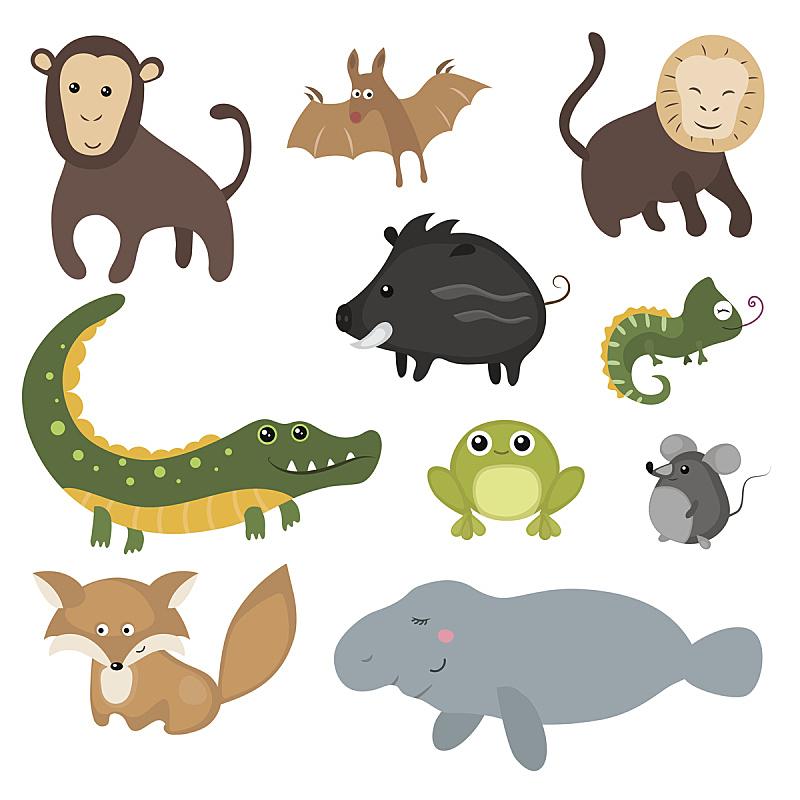 动物,矢量,南美,反差,猴子,可爱的,野猪类,华丽的,人老心不老,野生动物