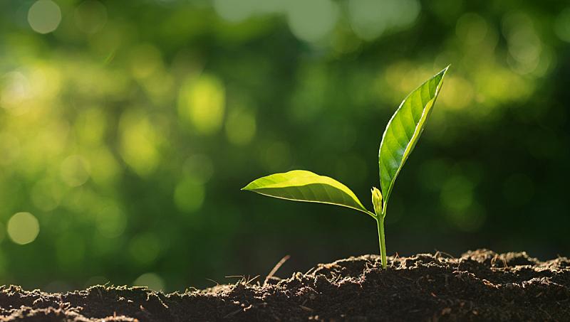 植物,特写,在上面,绿色背景,青年人,新的,水平画幅,泥土,早晨,户外