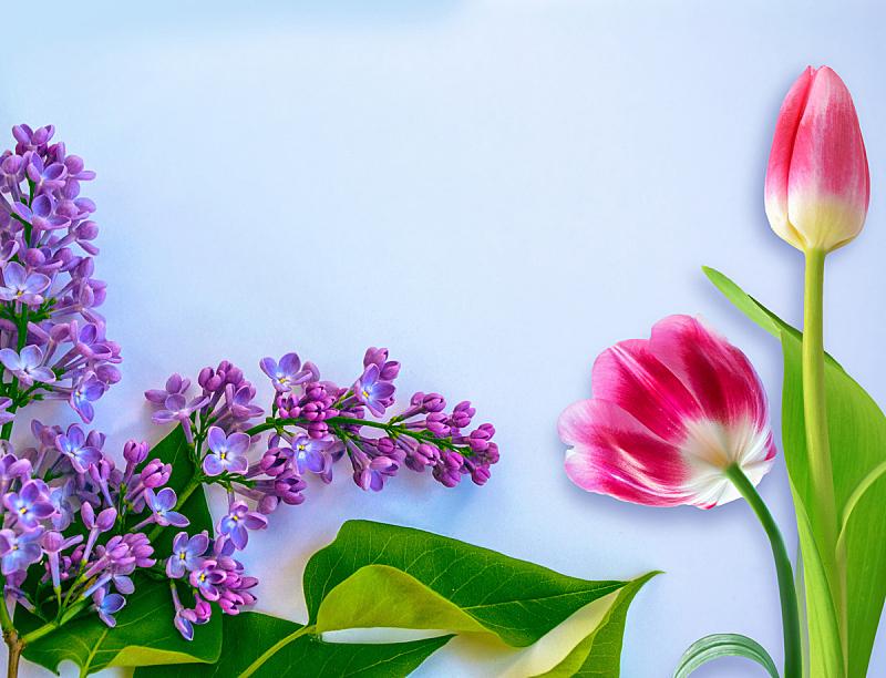 多色的,天空,美,水平画幅,郁金香,无人,夏天,草,特写,明亮
