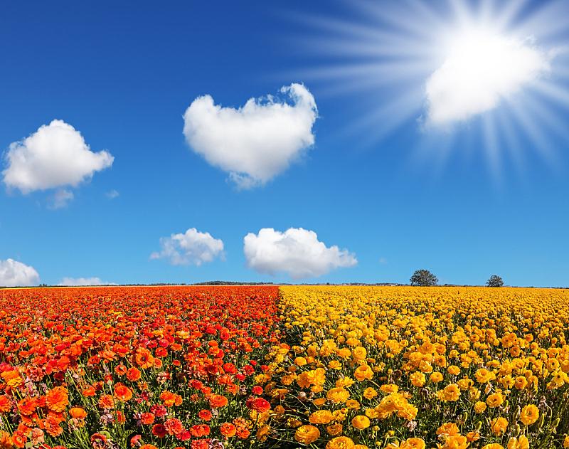 南,太阳,田园旅游业,毛莨科,天空,美,风,水平画幅,户外,草