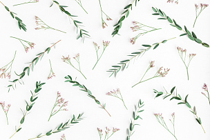 桉树,粉色,式样,视角,平铺,爱沙尼亚,野花,野生植物,花蕾,国际妇女节