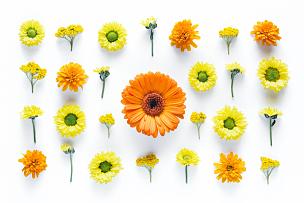 黄色,橙色,式样,雏菊,非洲雏菊,白色背景,留白,高视角,纯净,明亮