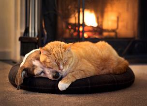 壁炉,猫,狗,宠物,热,动物,舒服,火,幽默,冬天