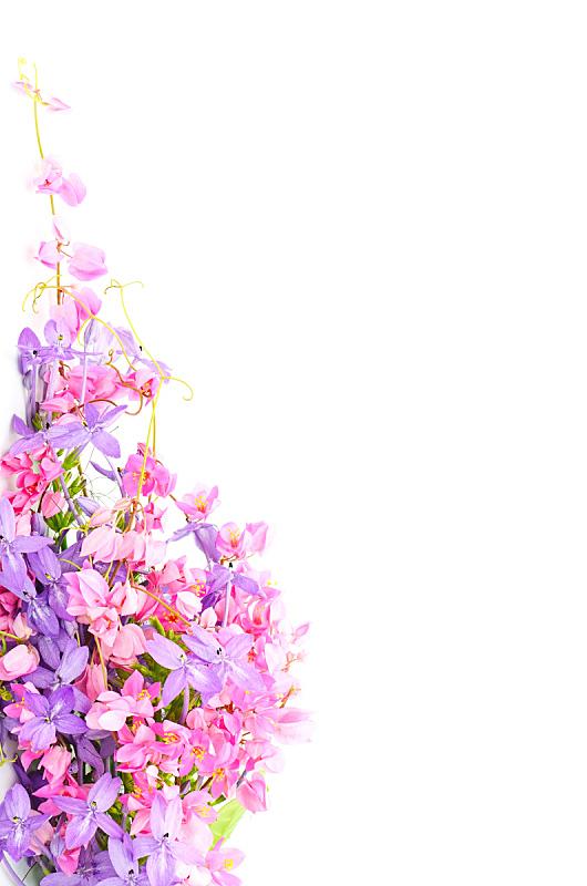 背景,自然,垂直画幅,式样,绿色,无人,色彩鲜艳,特写,花,装饰