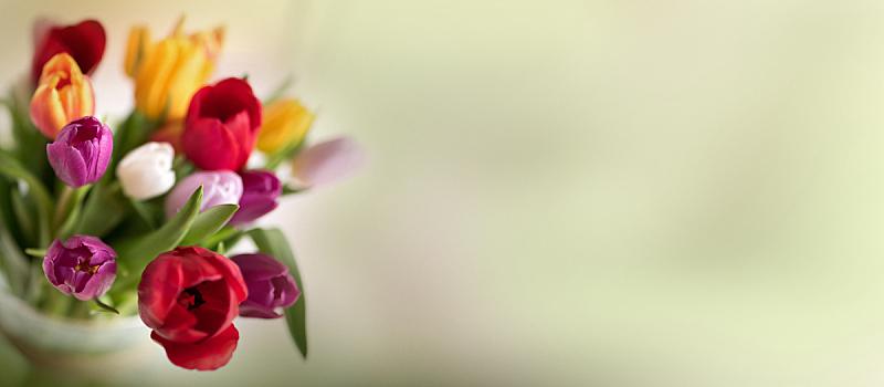 多色的,郁金香,花束,花店,圣灵降临节,母亲节,复活节,贺卡,水平画幅,绿色