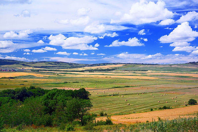 天空,面包,田地,山,美,水平画幅,云,夏天,户外,草