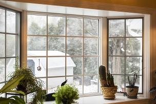 热,室内,风,雪花,盆栽植物,户外,反差,听从于,植物群,凸窗