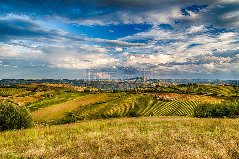 绿色,丘陵起伏地形,水平画幅,山,无人,户外,草,农作物,田地,葡萄园