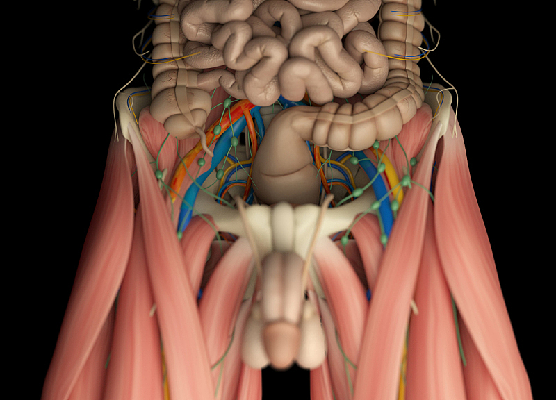 健美身材,淋巴系统,神经系统,人,人类骨架,水平画幅,无人,绘画插图,人类肌肉,科学