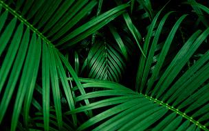 自然美,棕榈叶,看风景,异国情调,枝繁叶茂,灌木,热带音乐,植物学,棕榈树