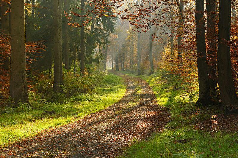 小路,森林,秋天,徒步旅行,阳光光束,多样,单车道,土路,树林,水平画幅