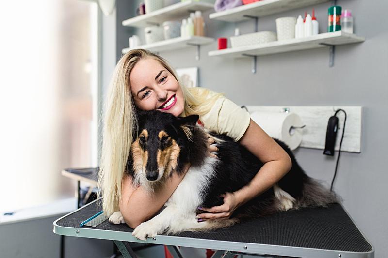 宠物美容店,可爱的,纯种犬,一个人,牧羊犬,狗,哺乳纲,女人,小的,头发