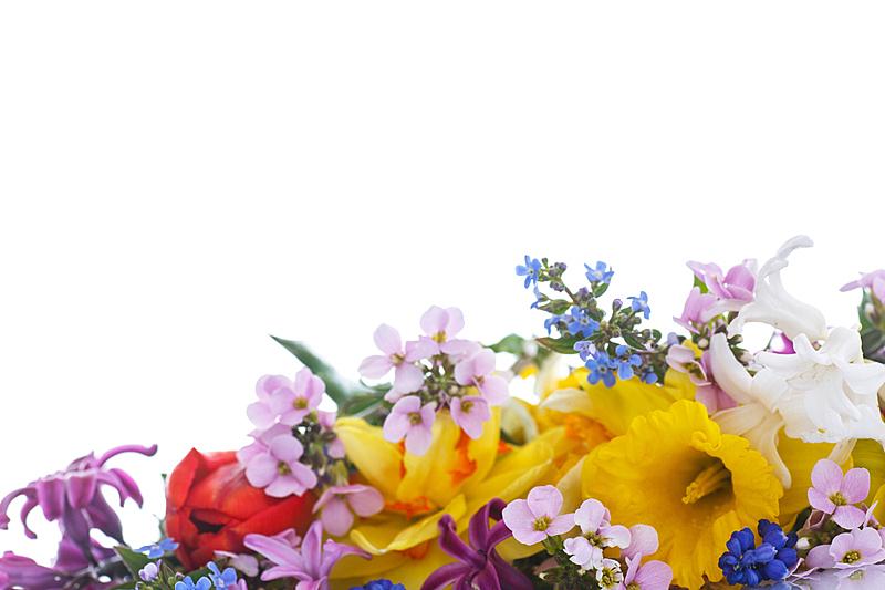 花束,春天,自然美,美,水平画幅,郁金香,无人,夏天,多花水仙,特写