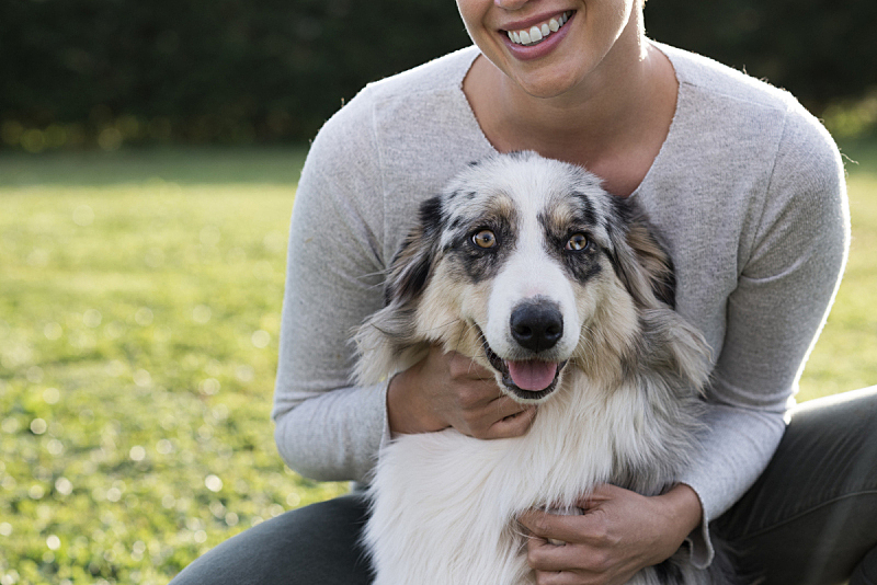 狗,注视镜头,美,公园,业主,水平画幅,进行中,爪子,动物身体部位