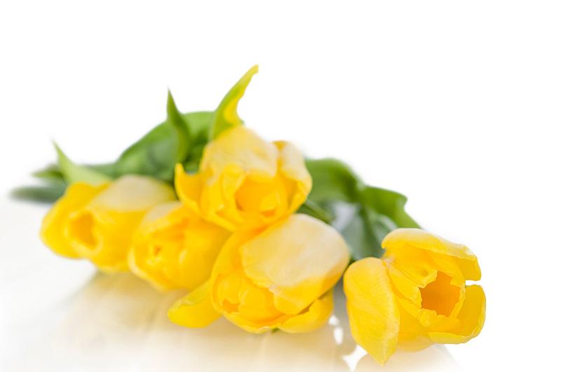 郁金香,黄色,自然,水平画幅,绿色,无人,自然美,花束,植物茎,春天