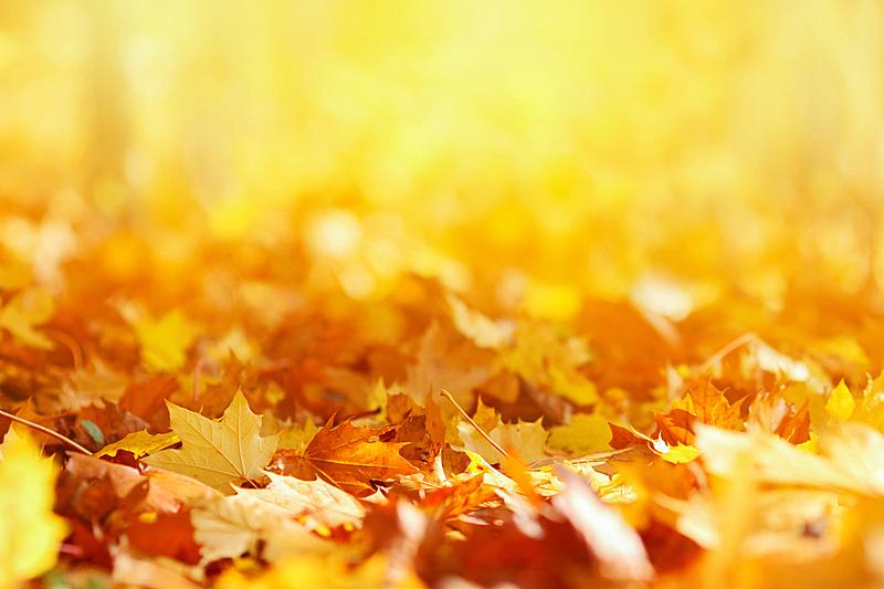 秋天,背景,叶子,留白,风,早晨,干的,光,明亮,抽象背景