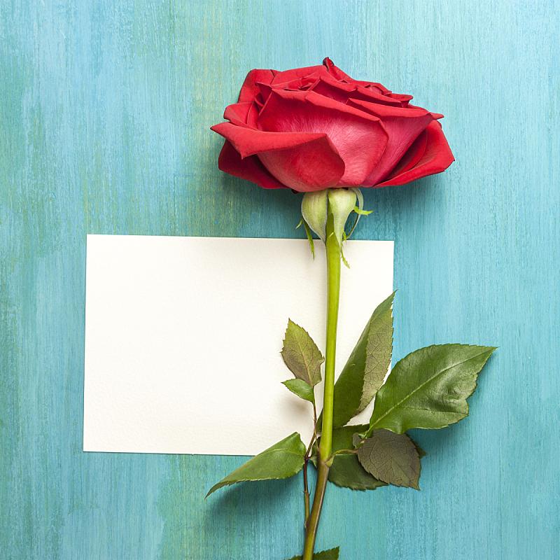 留白,玫瑰,明信片,空白的,红色,活力,青绿色背景,美,贺卡,边框