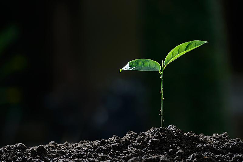 植物,自然,青年人,背景,早晨,灯开关,豆芽,秧苗,栽培植物,树苗