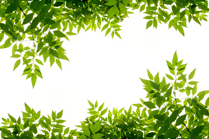 绿色,边框,叶子,白色背景,光,白色,灌木,边界,清新,闪亮的