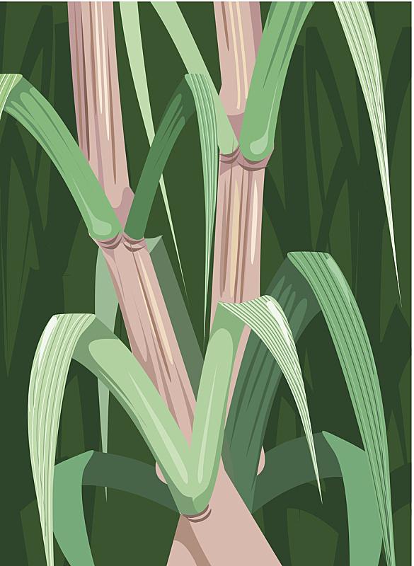 甘蔗,无人,农业,矢量,植物,食品,图像,植物茎,绘画插图,叶子