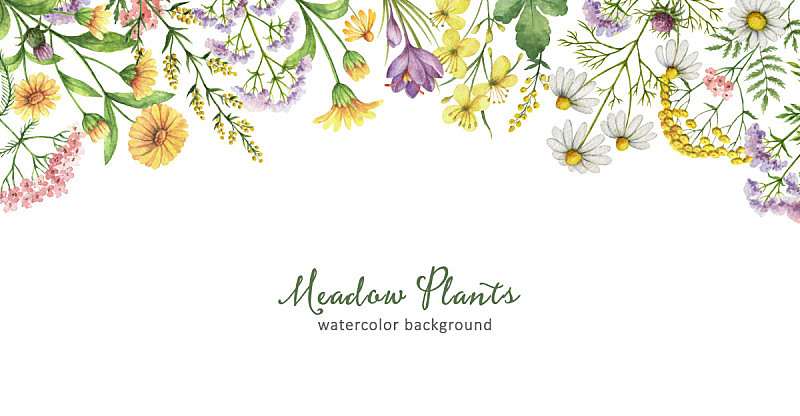健康保健,植物群,水彩画,艾菊,圣约翰草,奶蓟草,白屈菜,野金盏花,长方形