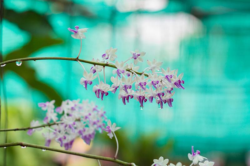 兰花,叶子,菜园,美,复活节,艺术,水平画幅,无人,夏天,室内植物