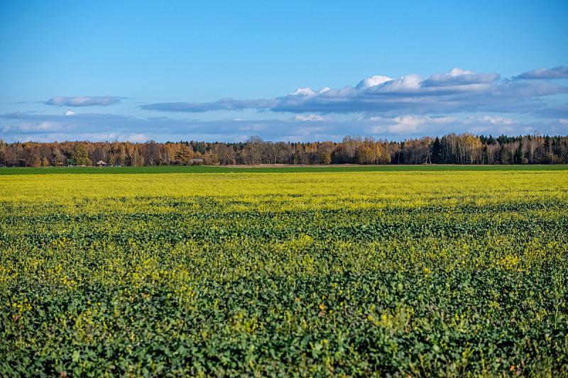 秋天,田地,绿色,农业,自然,拉脱维亚,在上面,图像,坏掉的,草