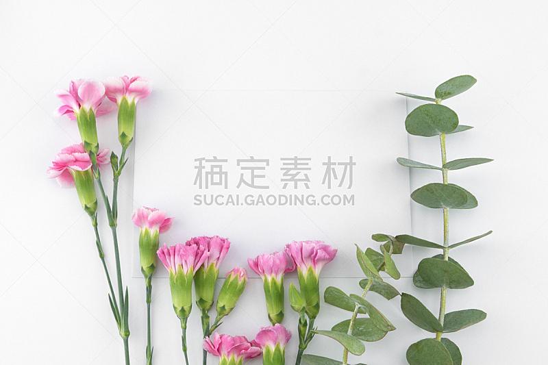 贺卡,白色,叶子,康乃馨,空白的,桉树,粉色,华丽的,婴儿,花
