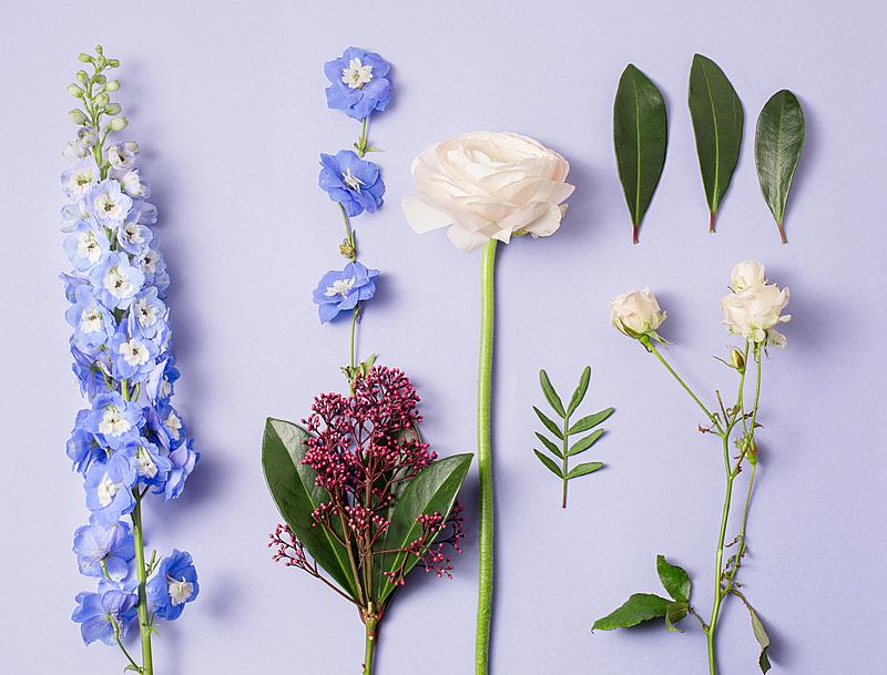 花束,花卉商,彩妆,个人随身用品,园艺器具,纹理效果,古典式,商店,夏天,顶部