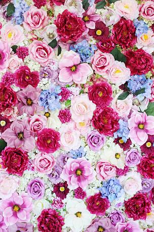 仅一朵花,围墙,多色的,垂直画幅,美,纹理效果,无人,夏天,玫瑰,生日