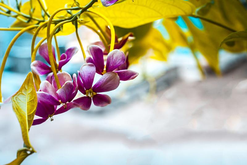 特写,攀缘植物,仰光,字体,平视角,纺织品,美,水平画幅,无人,花粉粒