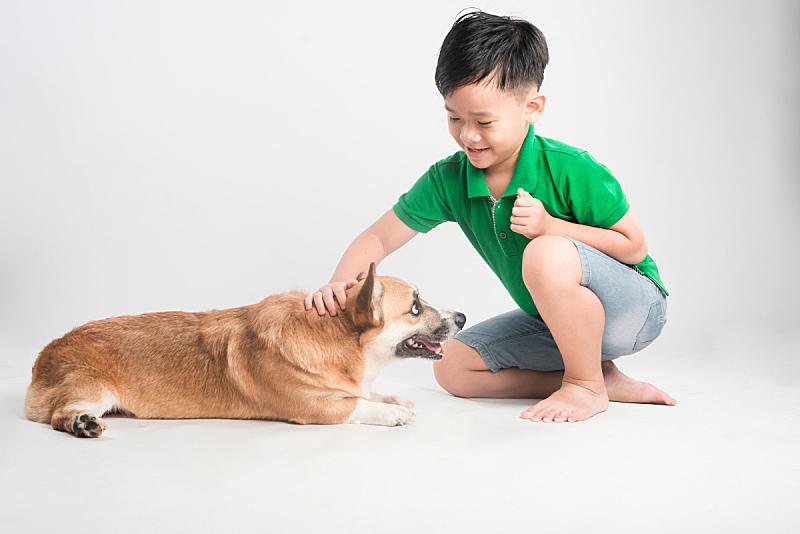 可爱的,男孩,狗,白色背景,宠物,越南,人,肖像,生活方式,图像