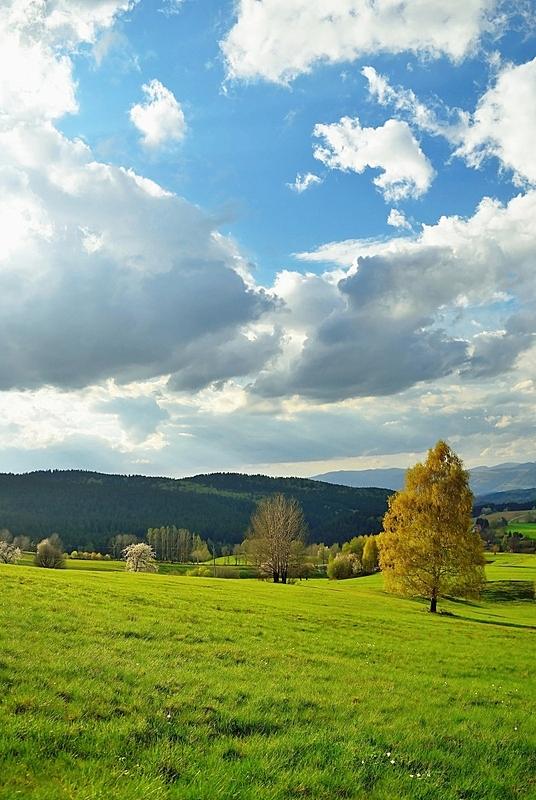 地形,斯洛伐克,垂直画幅,天空,樱桃,夏天,草,明亮,光,清新